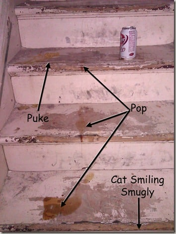 cat puke on stairs with arrows