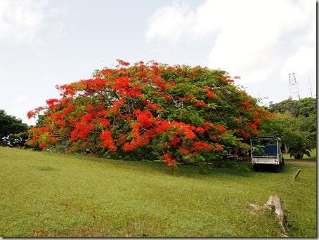St. Kitts - Saturday (60)