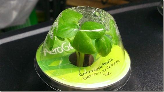 Indoor gardening with AeroGarden - growing