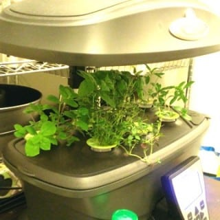 Awesome, Easy Indoor Winter Gardening