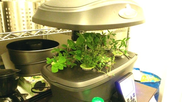 Behance indoor gardening with aerogarden workwithnaturefo