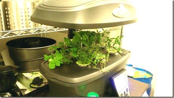 Indoor gardening with AeroGarden