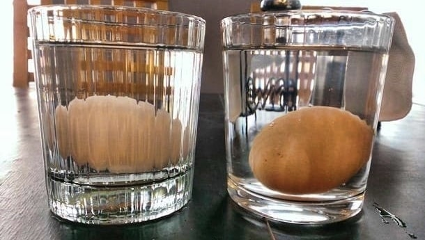 one white egg and one brown egg, each at the bottom of a glass of water