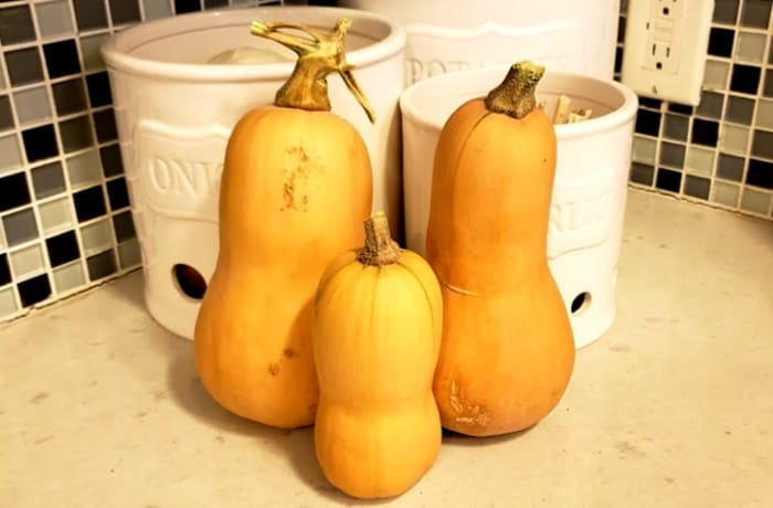 three butternut squashes on a counter