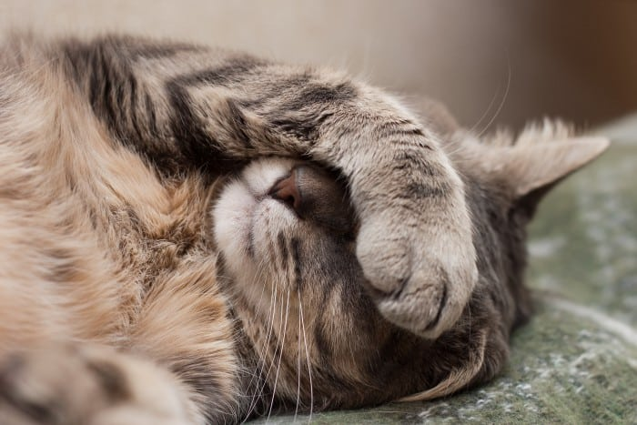 Can fasting get rid of jet lag? Cat lying down with paw over its face.