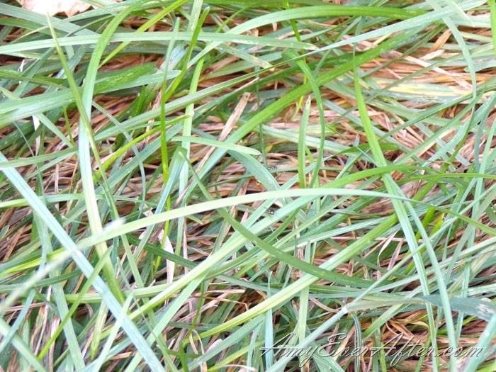 Kodak PIXPRO AZ401 Review - grass, close up