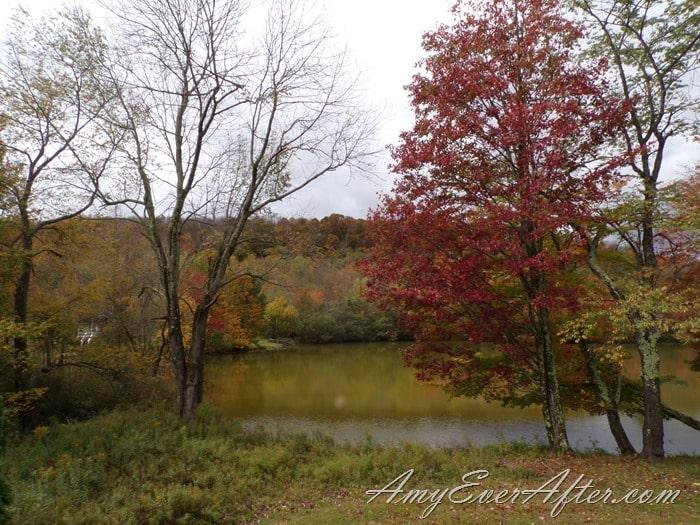 Kodak PIXPRO AZ401 Review - trees and lake, before BeFunky