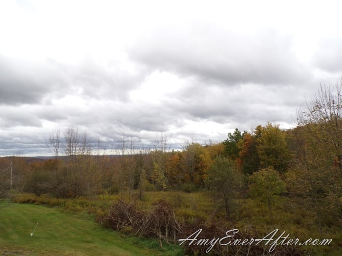 Kodak PIXPRO AZ401 Review - trees and sky with exposure compensation