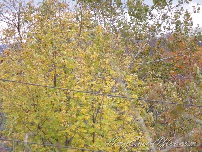 Kodak PIXPRO AZ401 Review - trees and power lines, full zoom