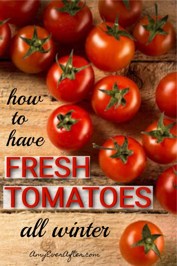 If you want to eat fresh, home-grown tomatoes in winter you need to do a little work now. But don't worry: growing tomatoes indoors hydroponically is easy! I've got tips and products that make it super simple to have fresh tomatoes, lettuce, herbs, or even flowers all year long. #gardening #tomatoes #aerogarden