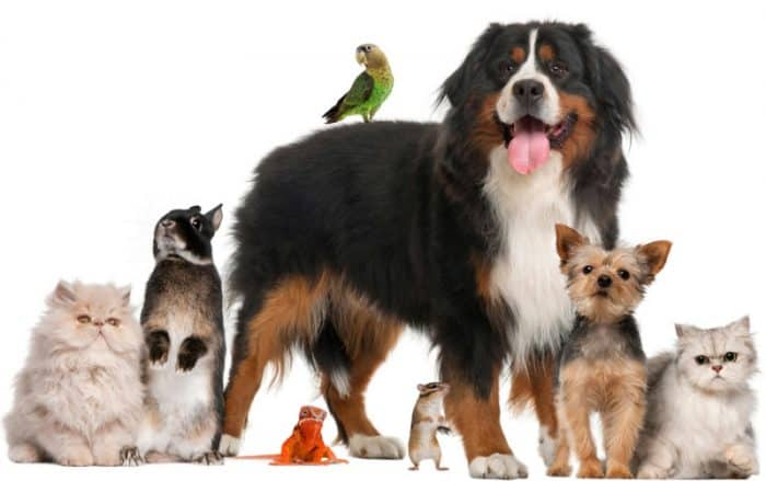 an assortment of animals, including cats, dogs, a bird, and rodents